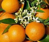 апельсин с листьями